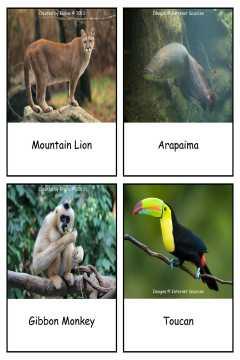 RainforestAnimals Cards byElaine SAMPLE
